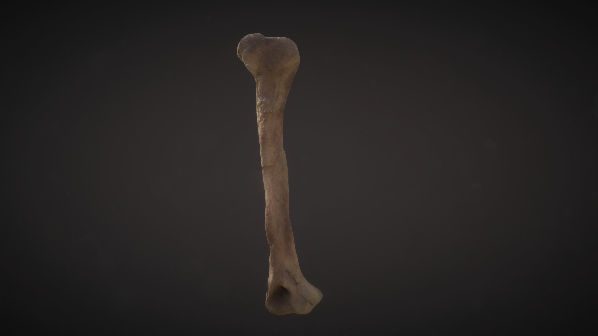Conor scott bone 2