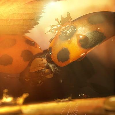Jarrod hasenjager love bugs 2015 1280x720
