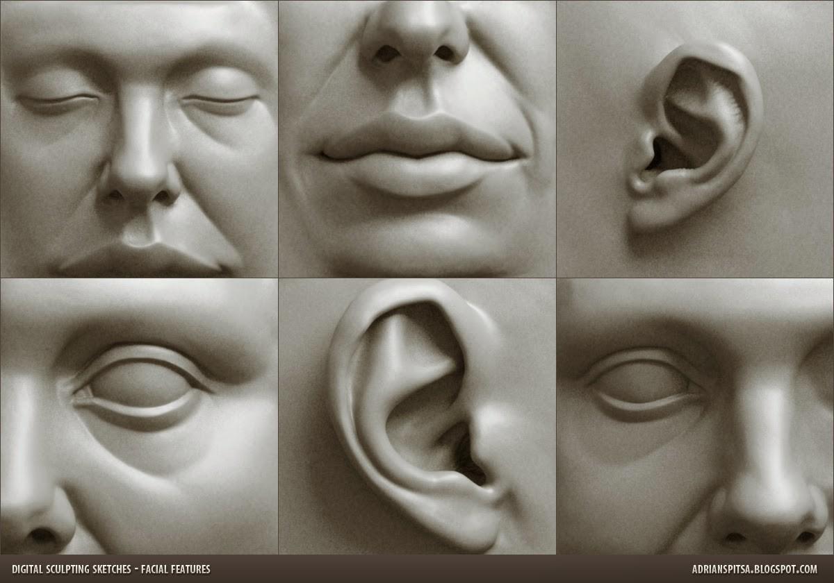 Adrian spitsa facial features a