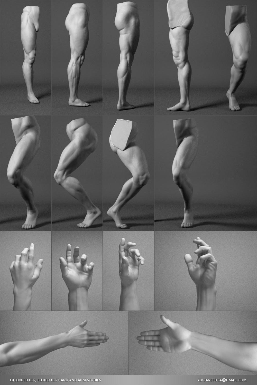 Adrian spitsa leg studies