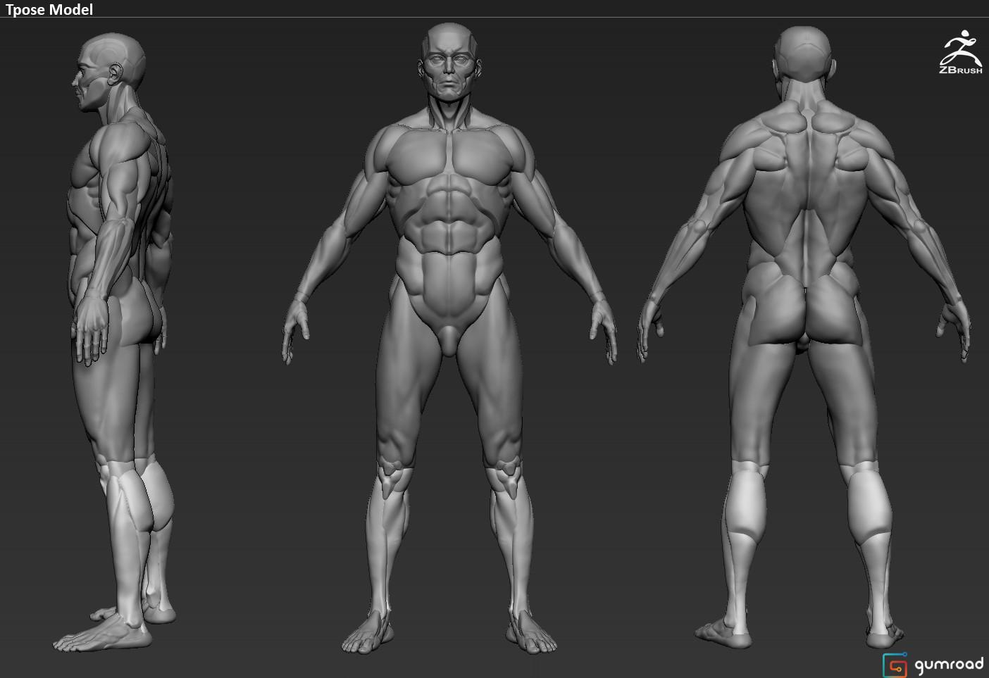 ArtStation - Gumroad Modular Anatomy, Carlos Cruz