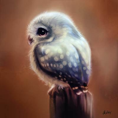 Okan bulbul littleowl02