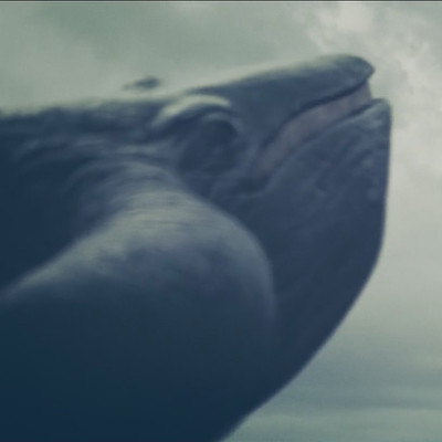 Lars gunnar thorell whale 2