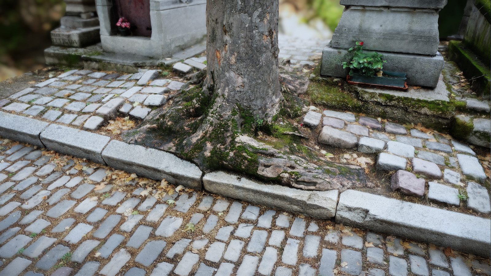 Photogrammetry: Père-Lachaise