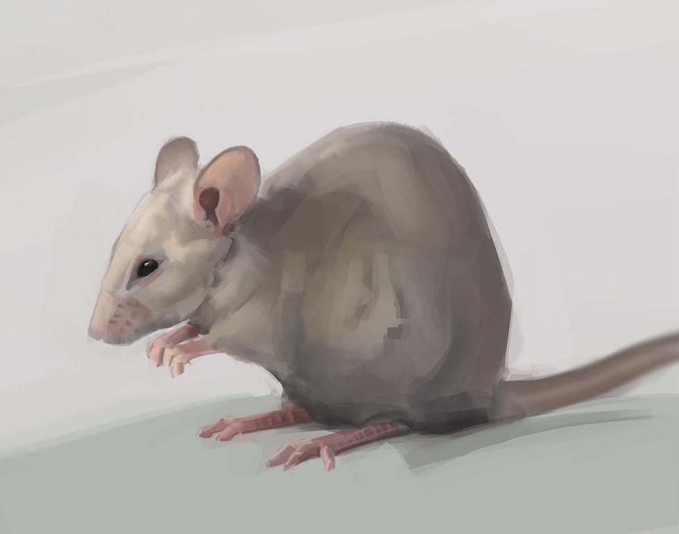 Nicolas morales 012 mice02
