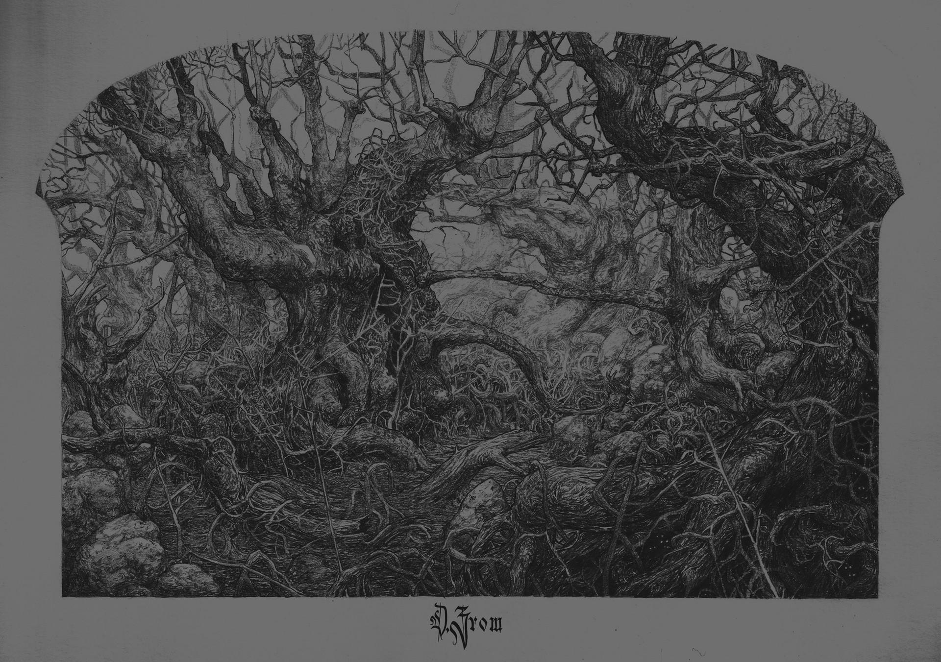 Daniel zrom darkswamp forest danielzrom