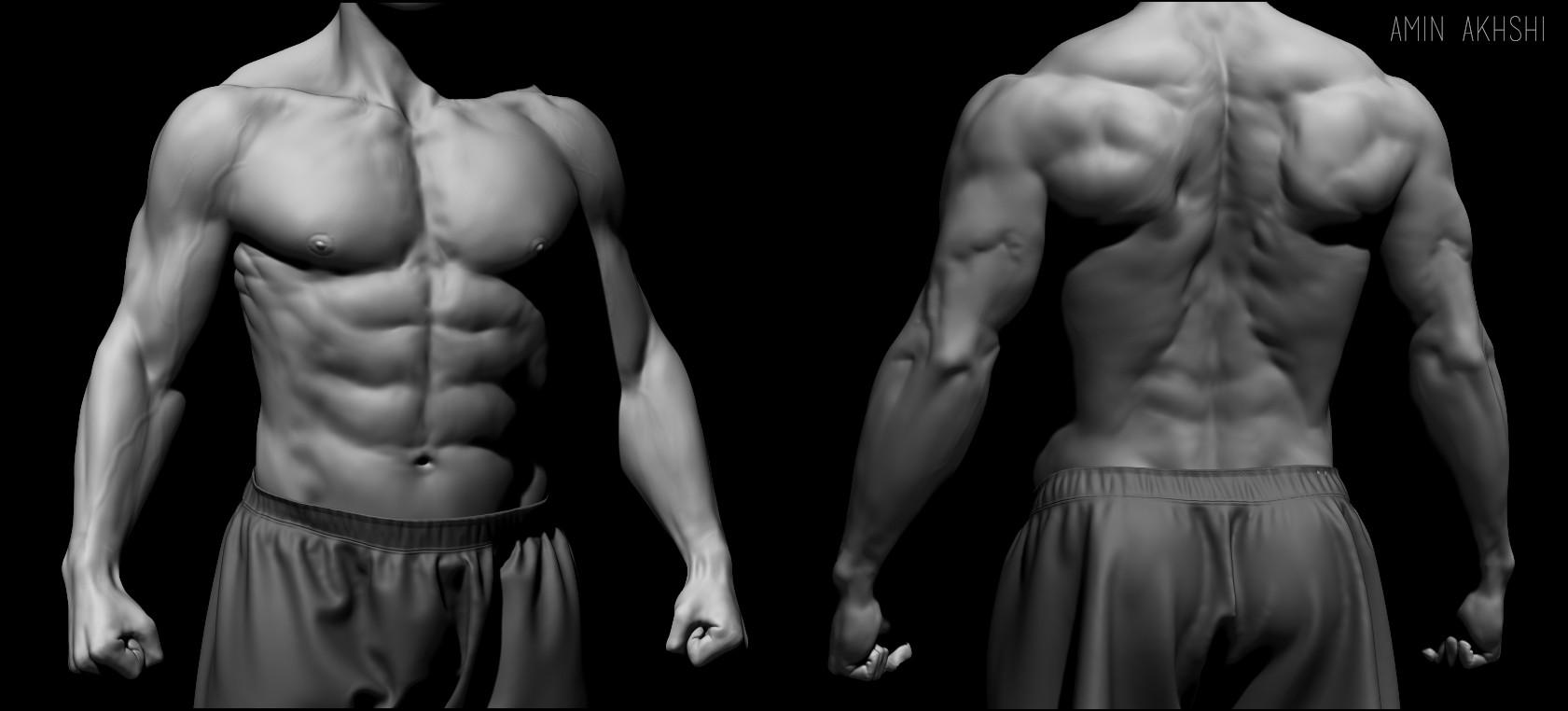 Amin akhshi male torso