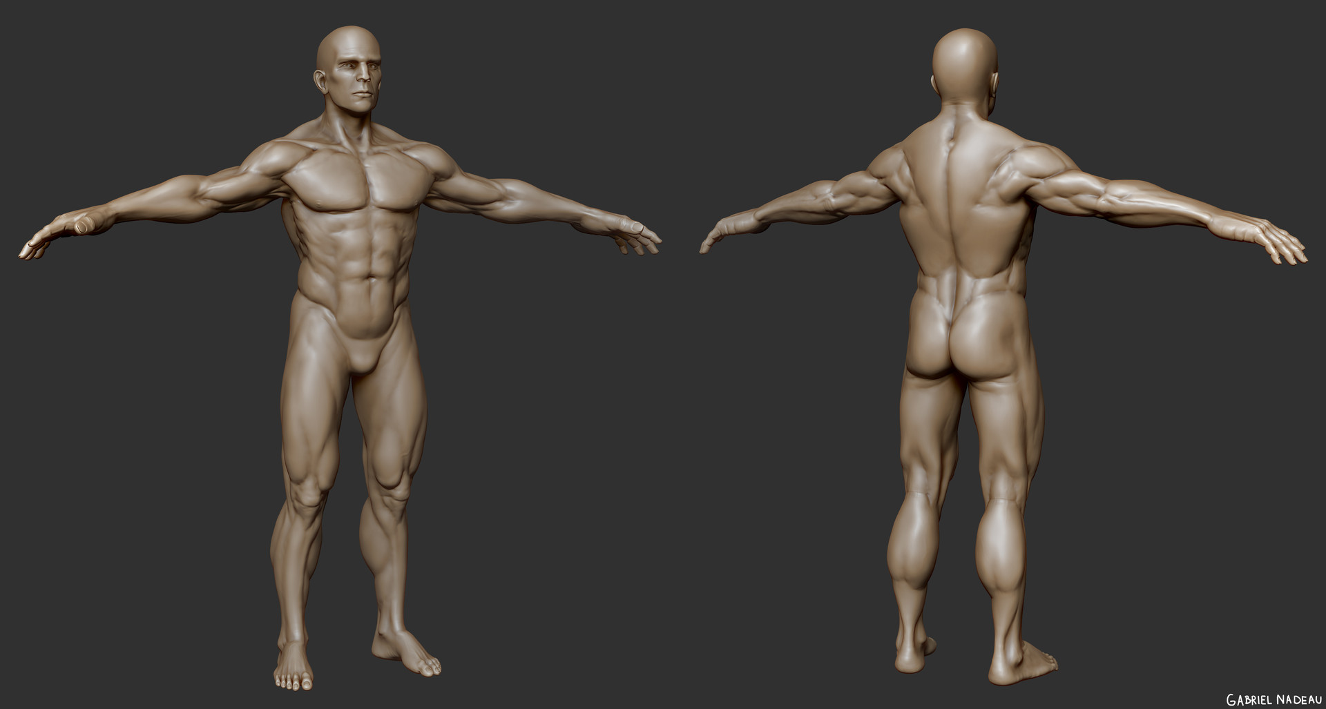 Gabriel Nadeau Portfolio Male Anatomy Study