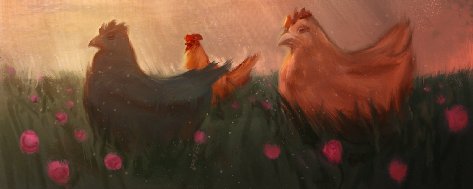 field chickens