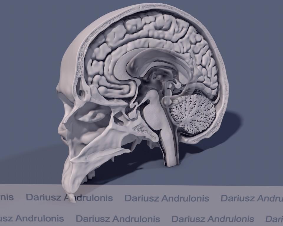 Dariusz andrulonis komory mozgowia
