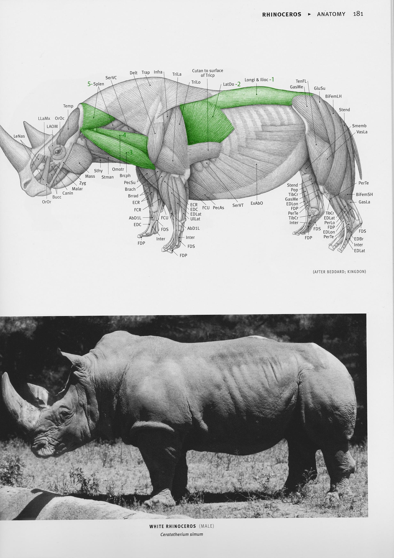 Jordi van hees rhino anatomy chart numbert