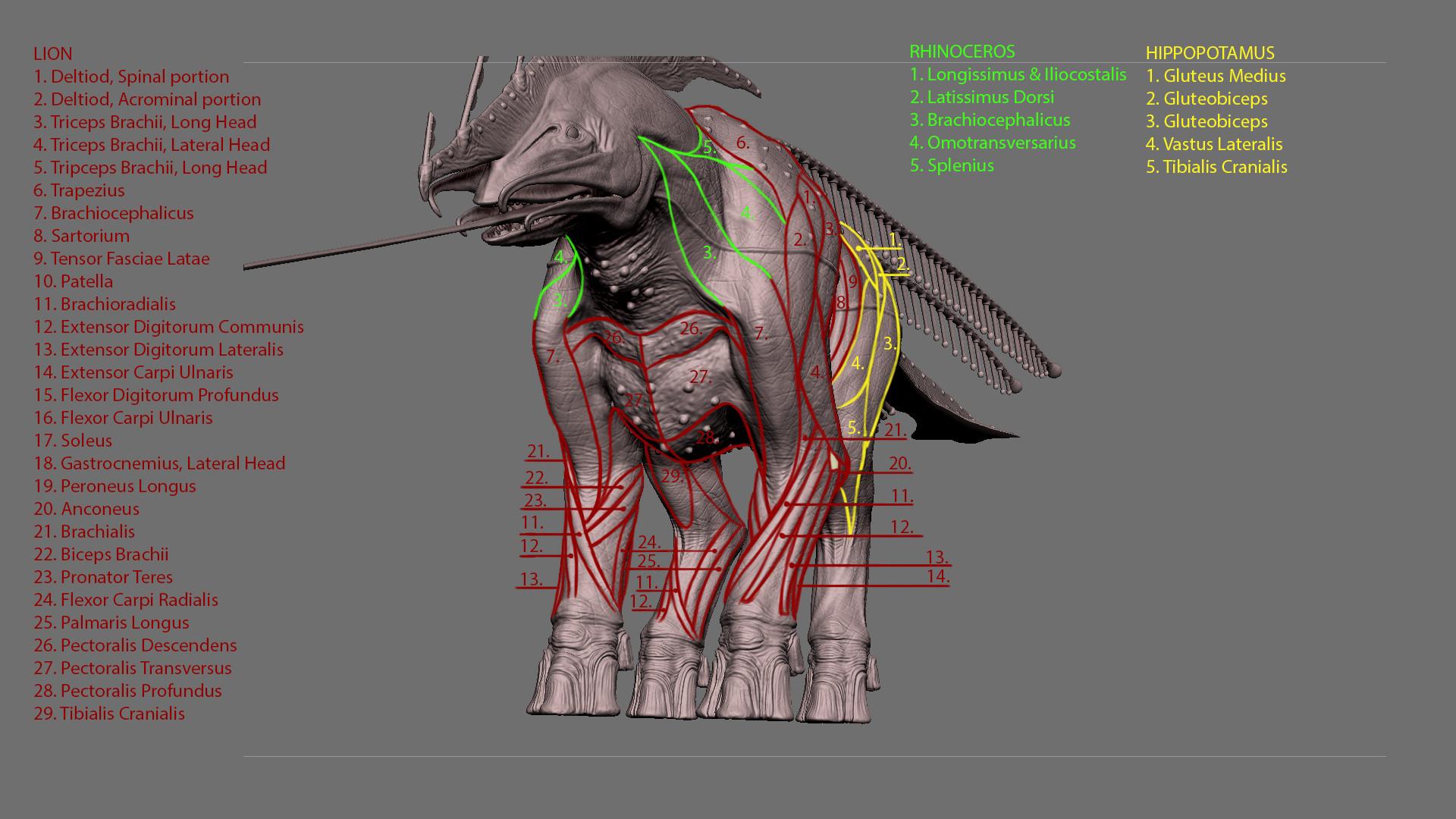 Jordi van hees anatomy explained inho slide 2