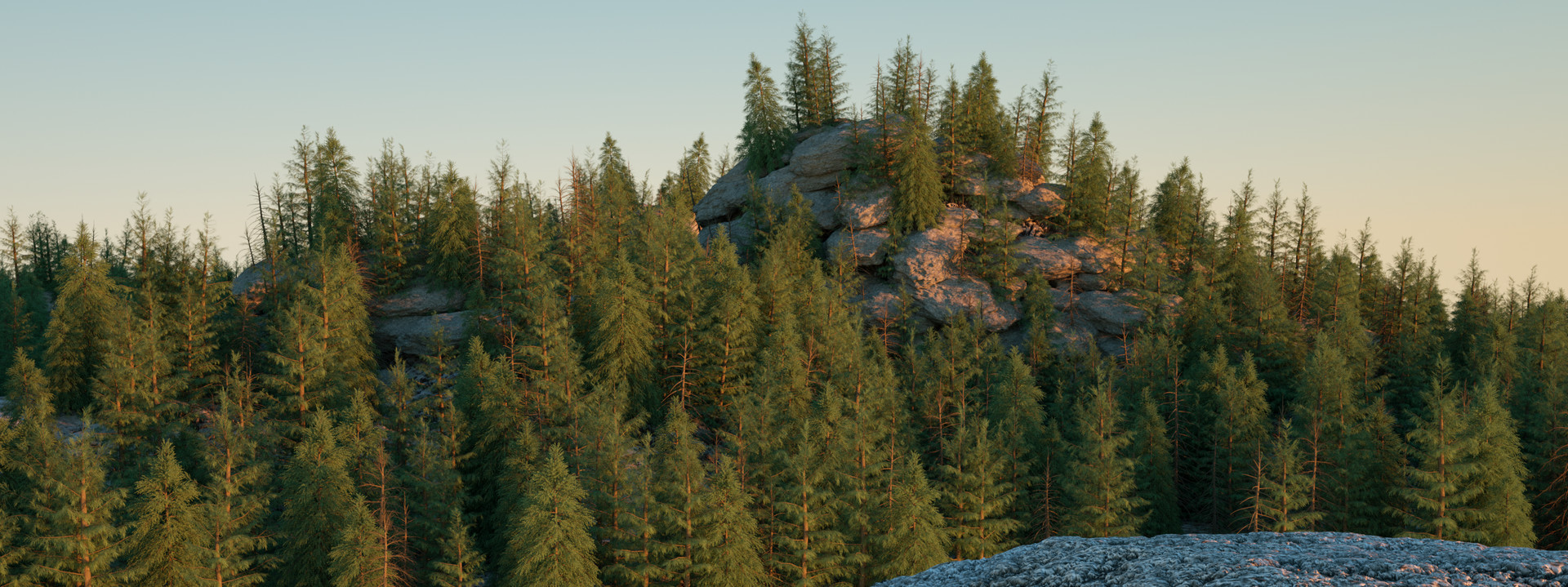 Mountain forrest