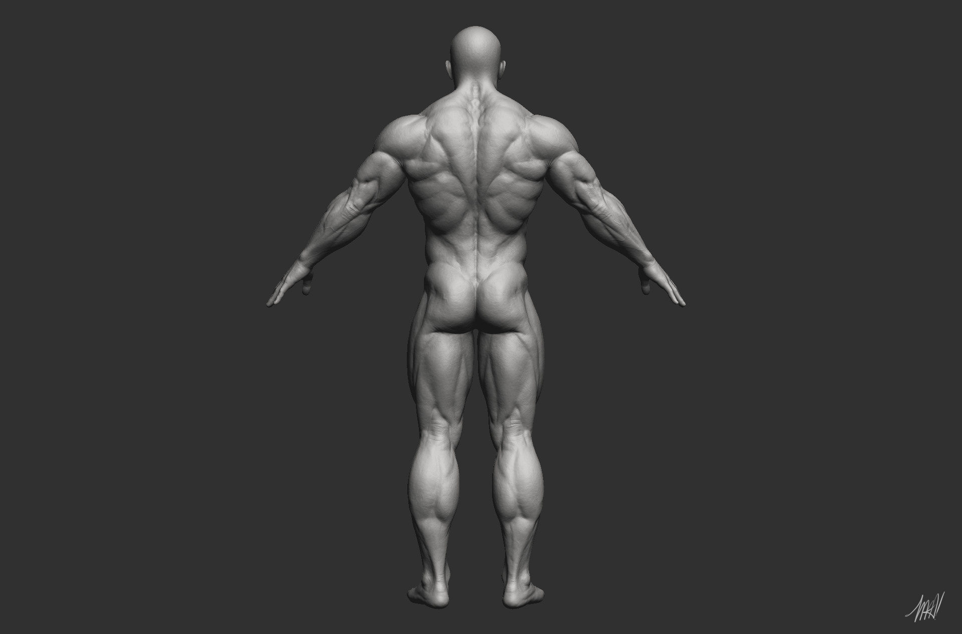 Artstation Anatomy Study David Madureira