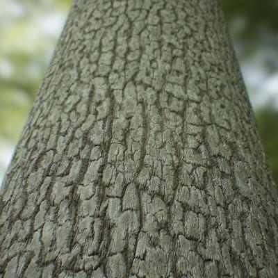 Jason colthrust treebark glamour
