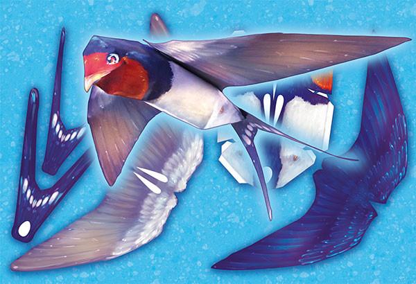 Iva vyhnankova swallow