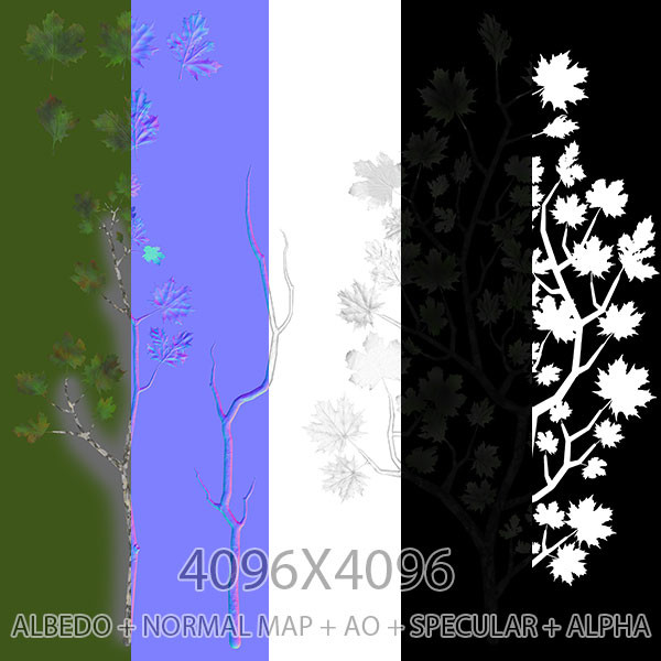 Joan misse platanaceae branchmaps