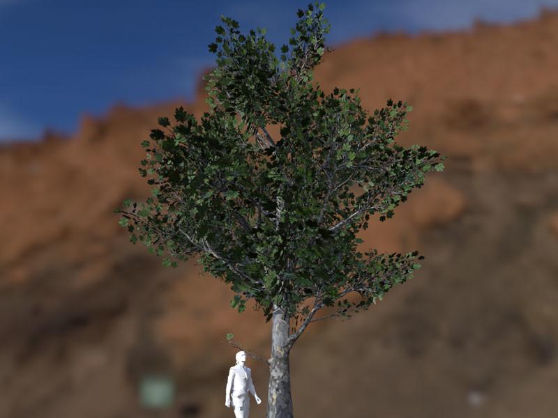 Platanaceae LOD00 (32.763 Tris)