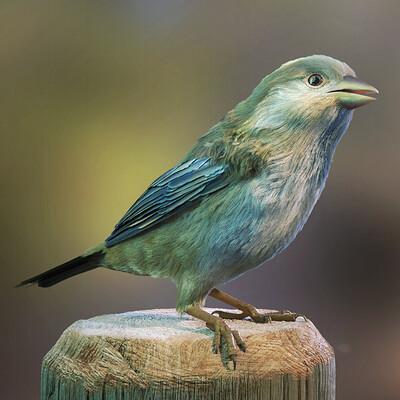 Fabian d abundo bird8