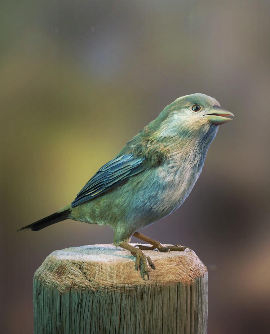 CG Bird