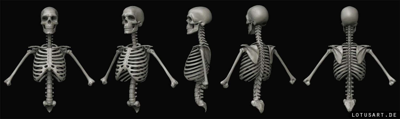 ArtStation - Anatomical 3D visualization, Alexander Beim