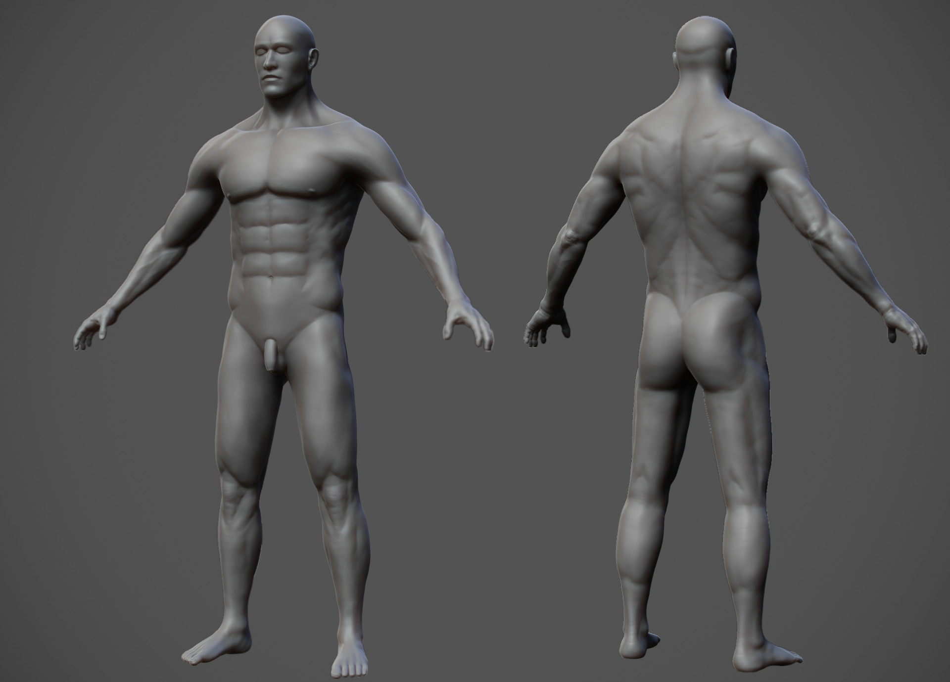 male anatomy study gallery - learn human anatomy image, Human Body