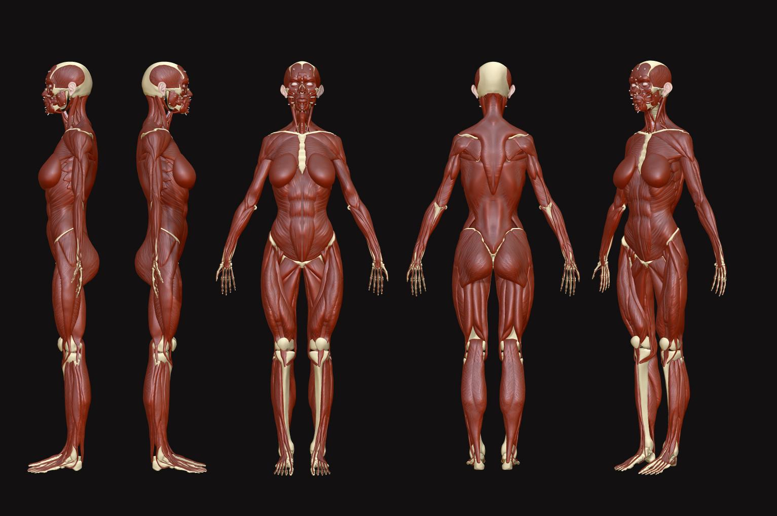 ArtStation - Anatomy Study 2015, Ruslan Gadzhiev