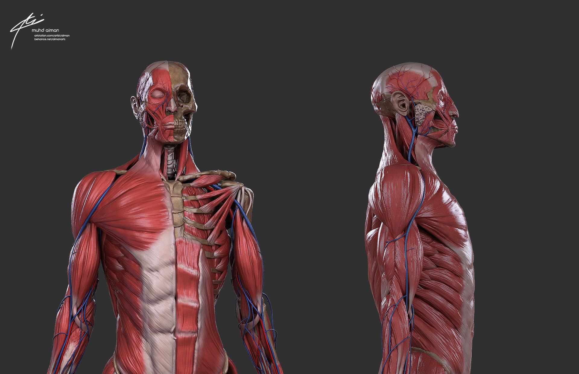 ArtStation - Male anatomy study, Muhammad Aiman Zubir