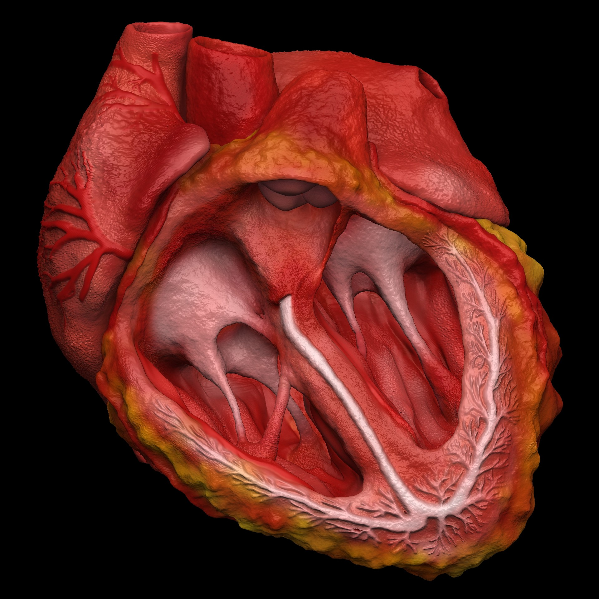 Artstation 3d Animated Realistic Human Heart V2improved Doctor
