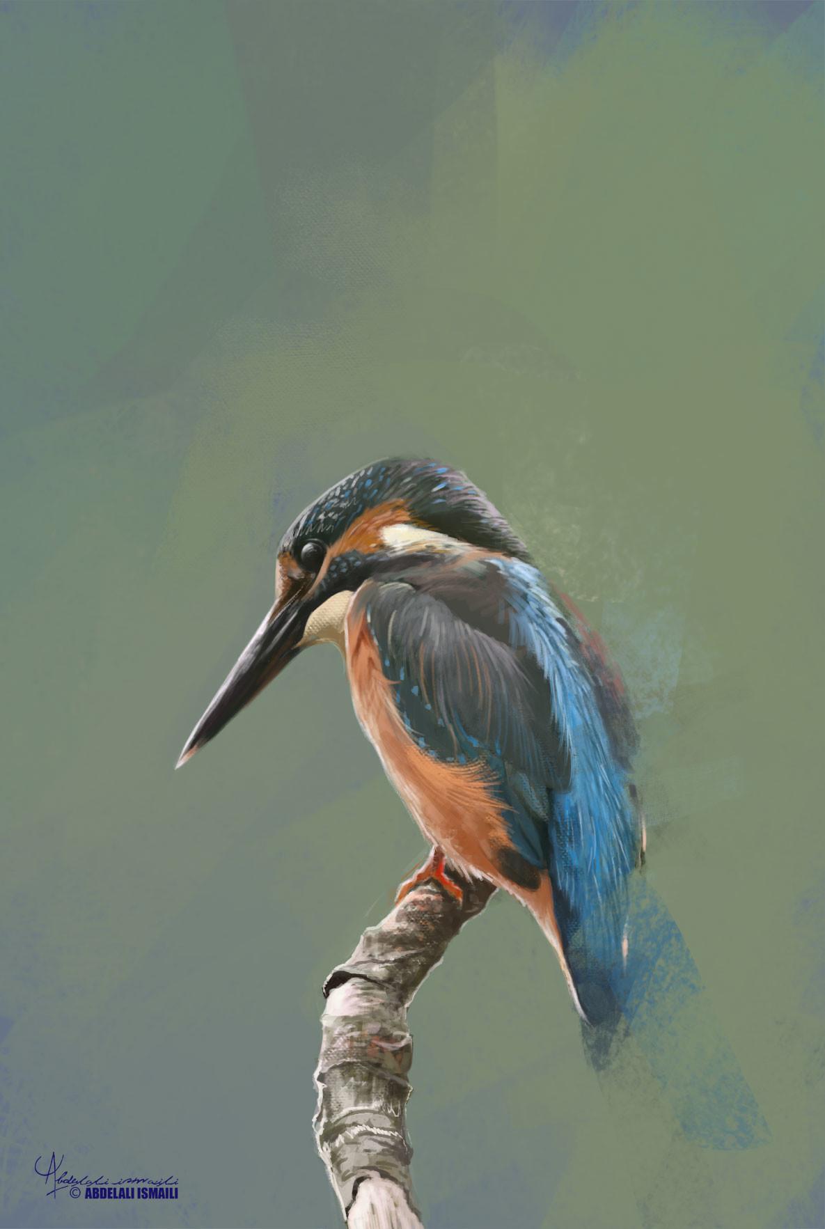Abdelali ismaili oiseau