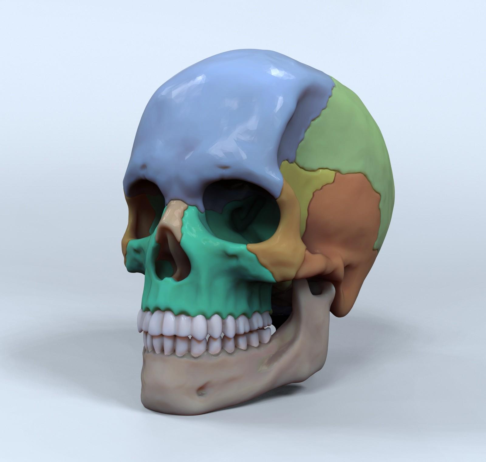 Hector moran skull renders 3