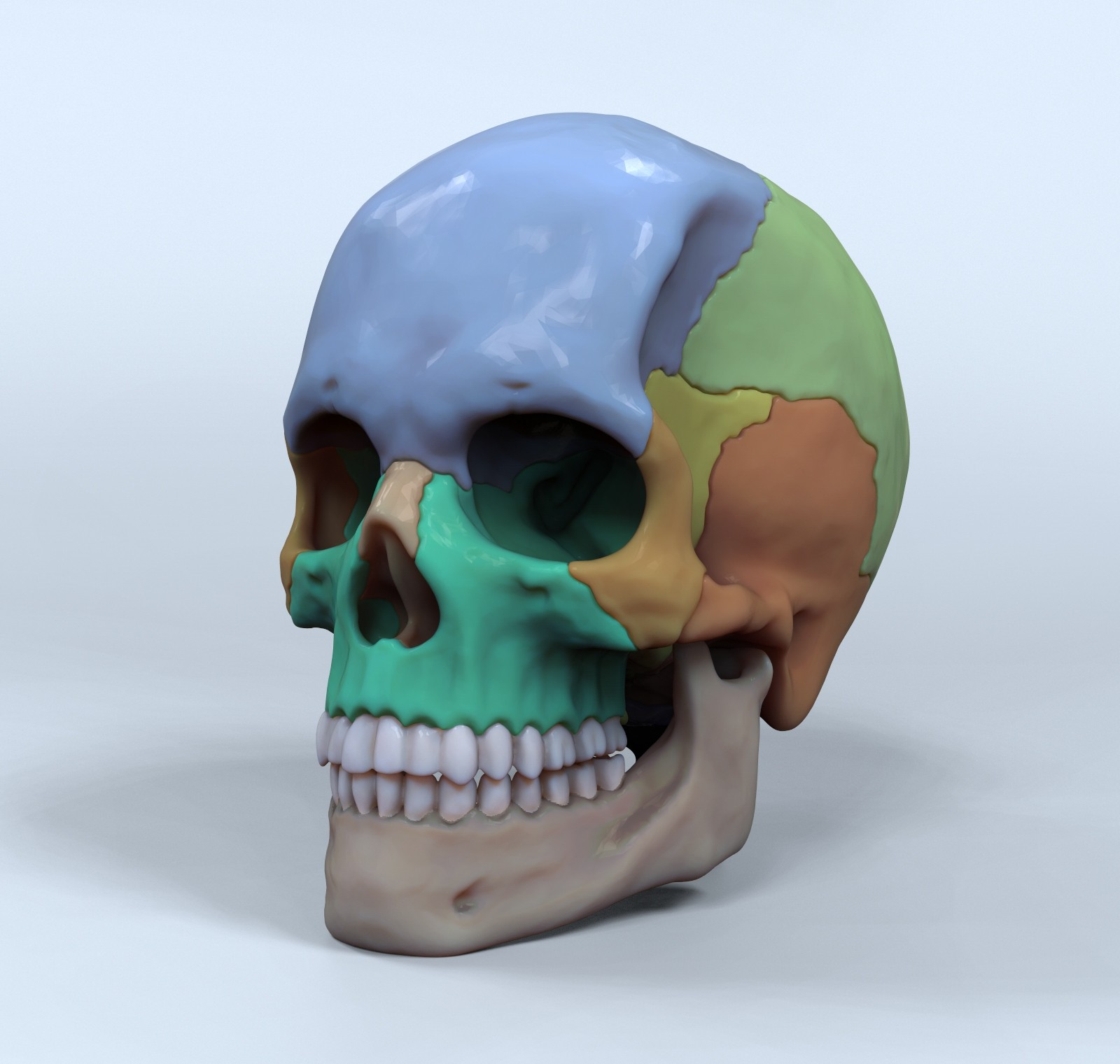 Skull for reference - 3D Asset