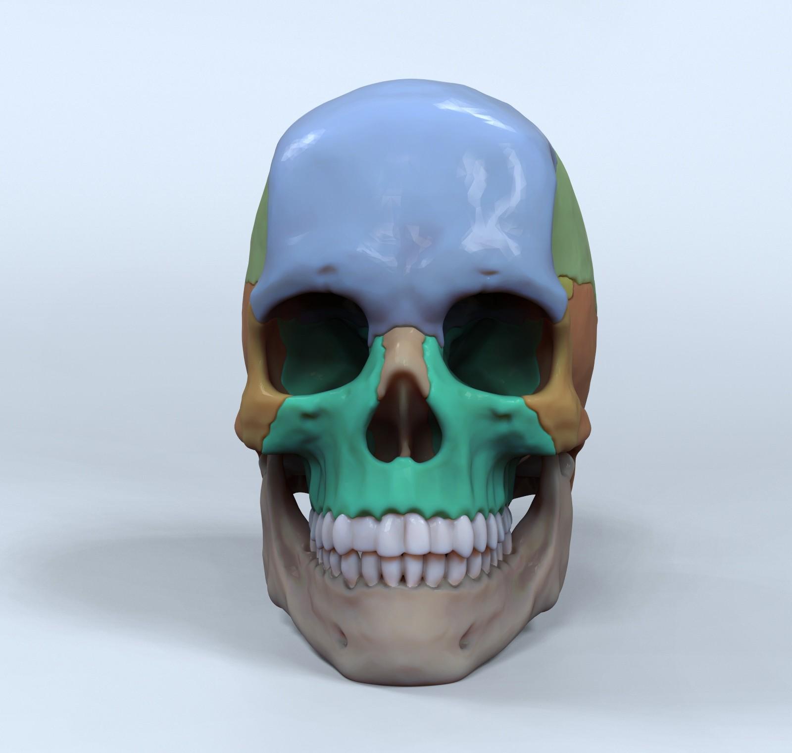 ArtStation - Skull for reference - 3D Asset, Hector Moran (HEC)
