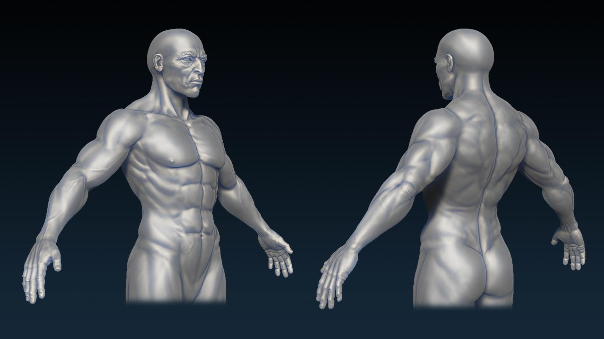 Artstation Male Body Anatomy Leonard Teh Whei Kene