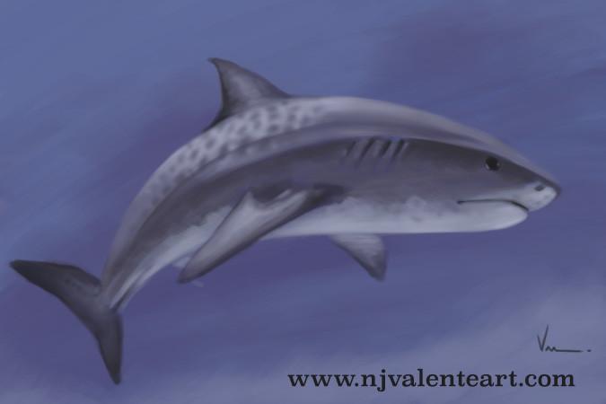 Shark speed paint