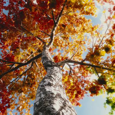 Kless gyzen colorful tree3