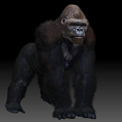 Doug drexler gorilla a knuckles 03