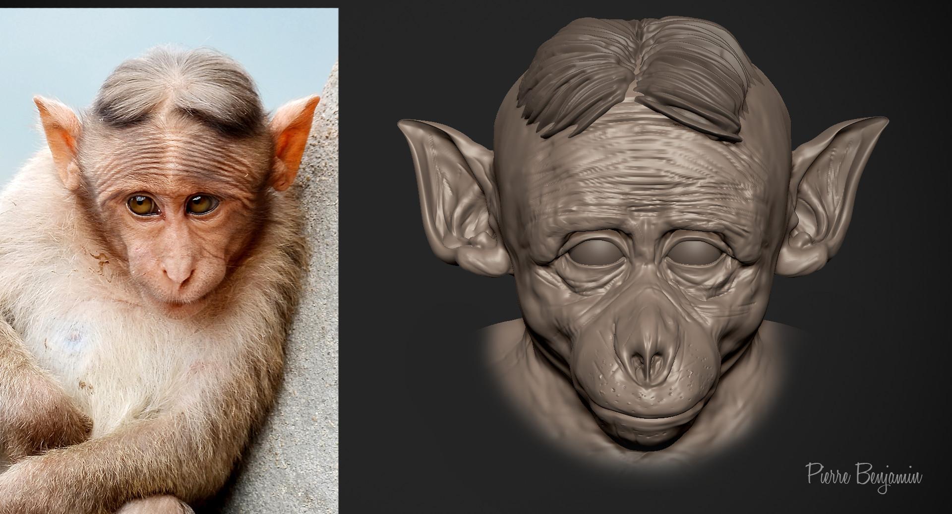 Pierre benjamin new funny monkey