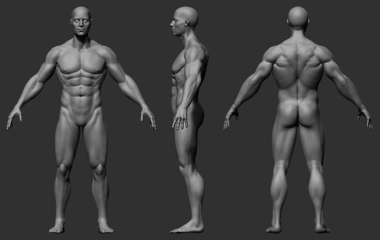 Yu Han Yu - Male Anatomy Study 01