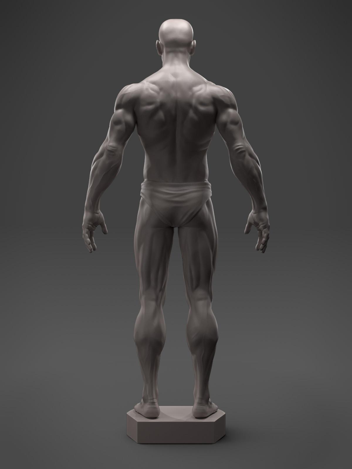 Hector moran anatomyguy back