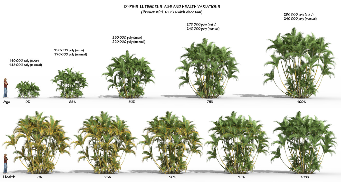 Fr 233 D 233 Ric Bec Dypsis Lutescens Chrysalidocarpus