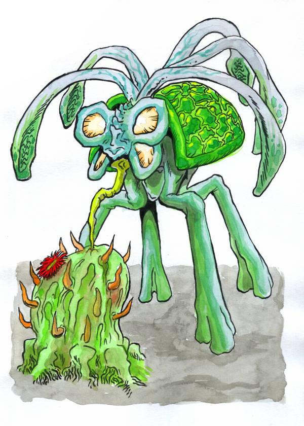 Khairul hisham cactus snogger