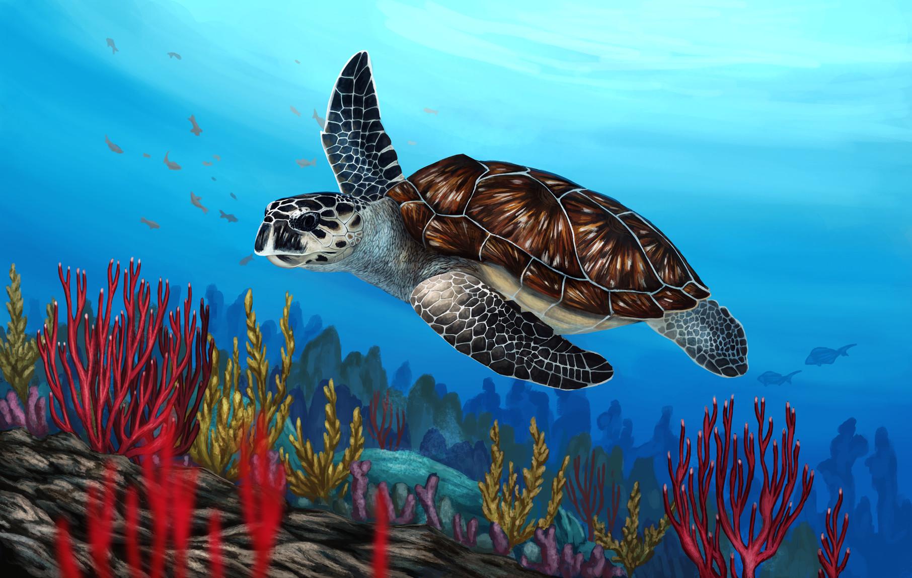 Martina nachazelova hawksbill sea turtle mala