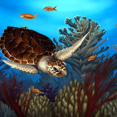 Martina nachazelova loggerhead sea turtle20