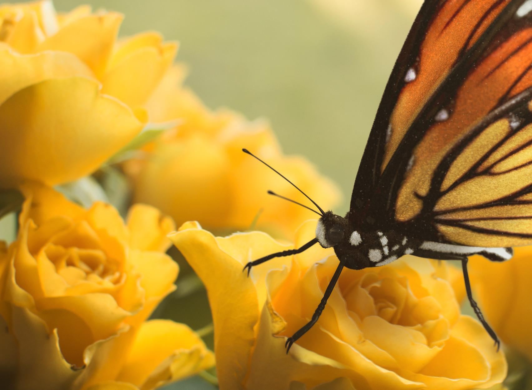 Krzysztof gryzka butterfly 02