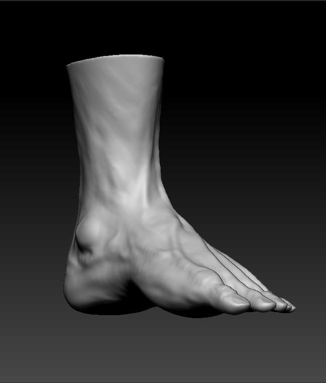 Dj Choi Human Anatomy Male Foot