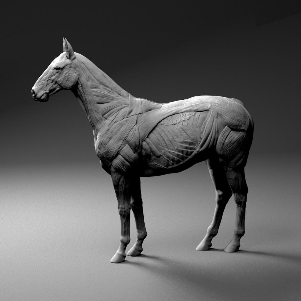horse anatomy - Selo.l-ink.co