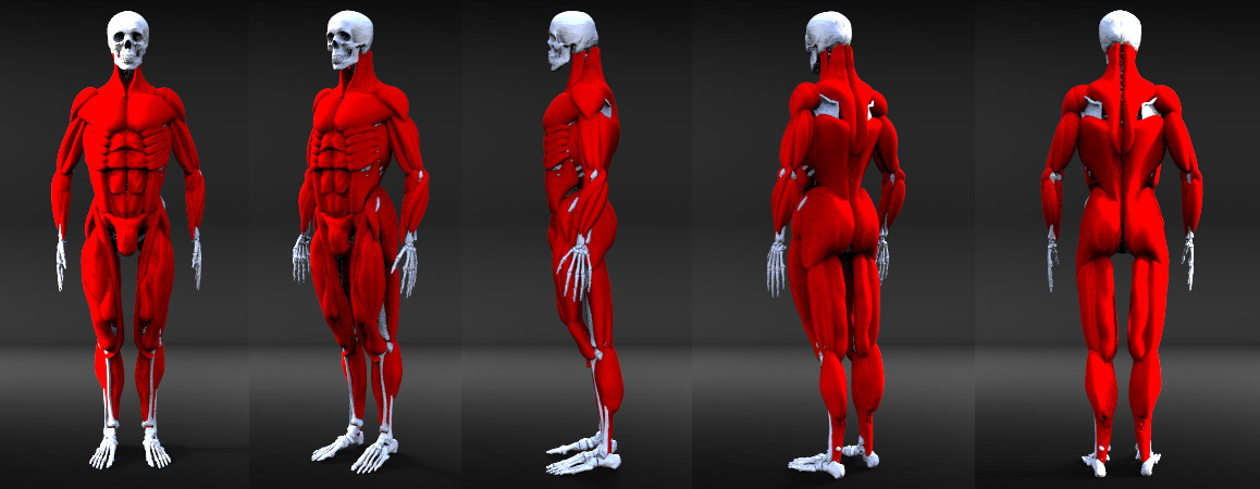 Diego Domeo Study Of The Human Body In Zbrush