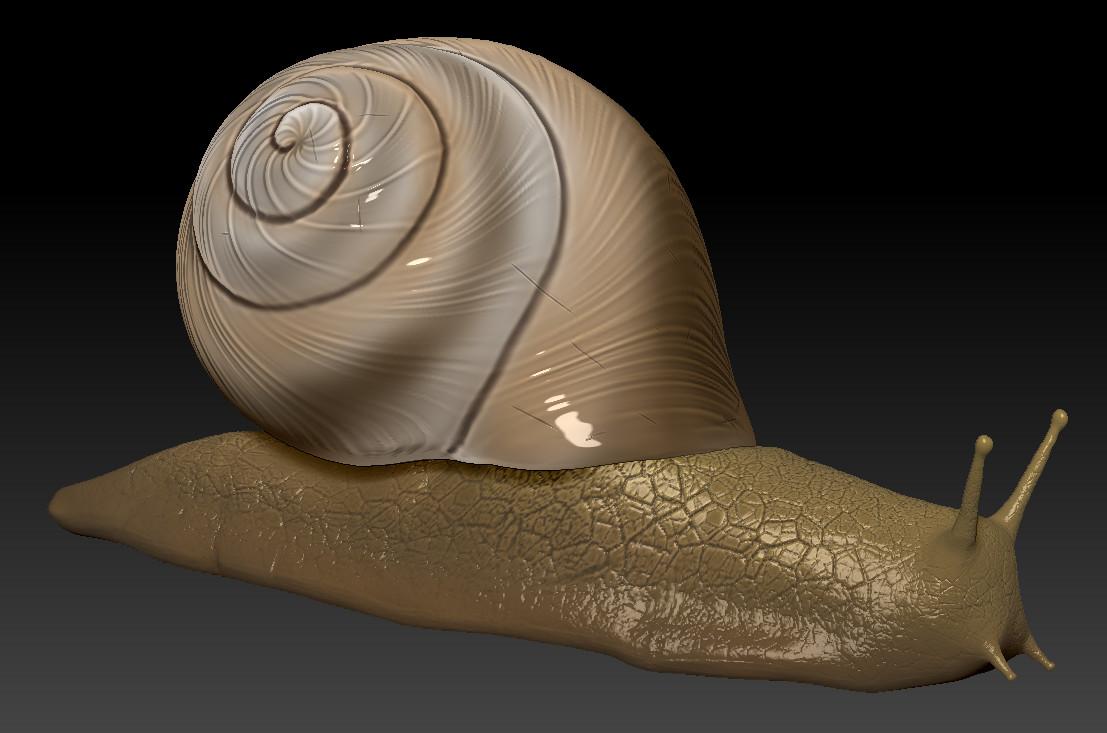 Ehab charek snail1