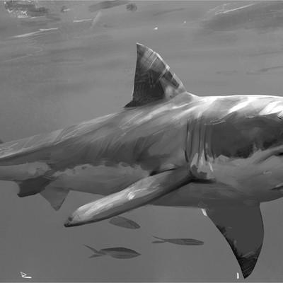 Erik nilsson sharkartstation